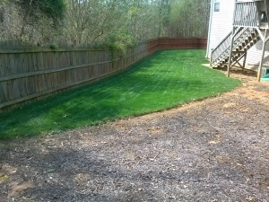 Fescue Lawn Care Acworth, Ga