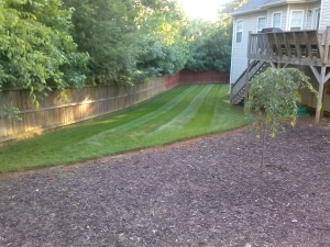 Lawn Care Acworth Ga - Fungus