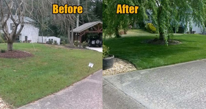 Lawn Care Acworth Ga - Fescue Lawn (Before/After)