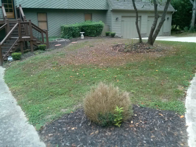 Lawn Care Acworth Ga - Ugly Lawn (Before Picture)